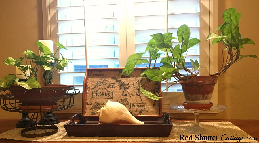 A bright and easy summer living room window shelf with plants and a large shell. www.redshuttercottage.com