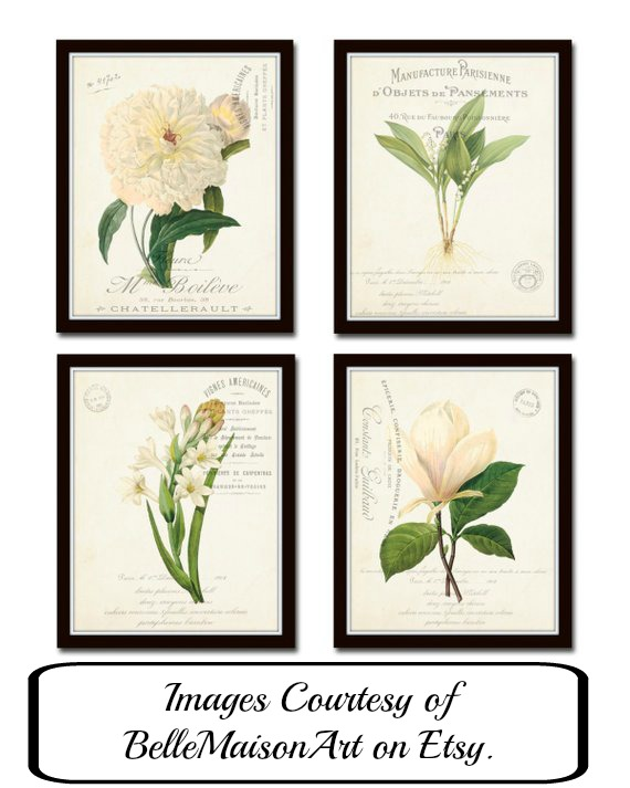 Beautiful botanical art images from BelleMaisonArt on Etsy. Botanical prints are part of the 5 Timeless Elements of Design. www.redshuttercottagecom