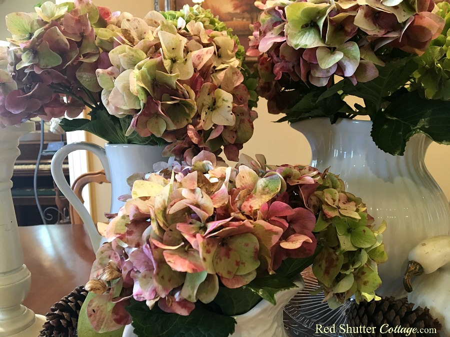 How to decorate using alternative fall alternative colors includes late summer hydrangeas in white pitchers. www.redshuttercottage.com